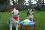 Waiting for their cake Views: 1378 Rating: 4.67/5 Date: 05.02.04 280x187 (26.4 KB)