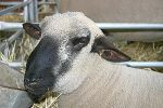 Royal Melbourne Show 2004 Views: 566 Rating: 0/5 Date: 18.10.04