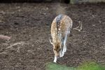 Taronga Zoo Views: 638 Rating: 0/5 Date: 25.08.09 901x600 (289.4 KB)