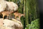 Taronga Zoo Views: 472 Rating: 0/5 Date: 25.08.09 901x600 (351.4 KB)