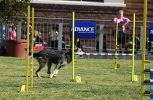 Dog Agility - jumping. Views: 1395 Rating: 4/5 Date: 04.10.07 400x261 (100.0 KB)