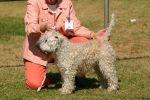 Geelong Show 2008 Views: 411 Rating: 0/5 Date: 24.08.09 901x600 (313.6 KB)