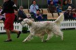 Melbourne Royal 2009 Views: 518 Rating: 0/5 Date: 05.01.10 901x600 (246.6 KB)